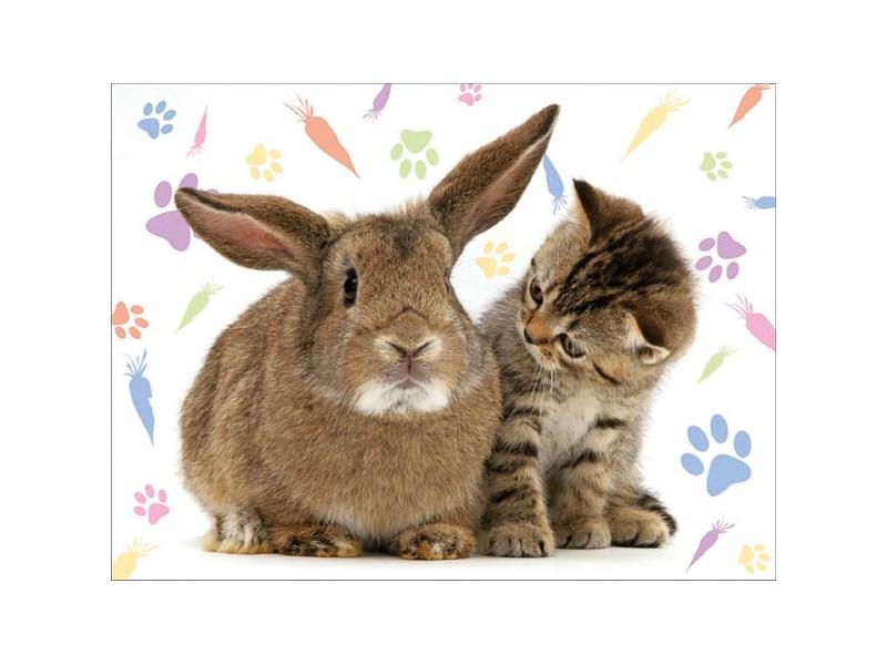 Кролики и кошки фото 3